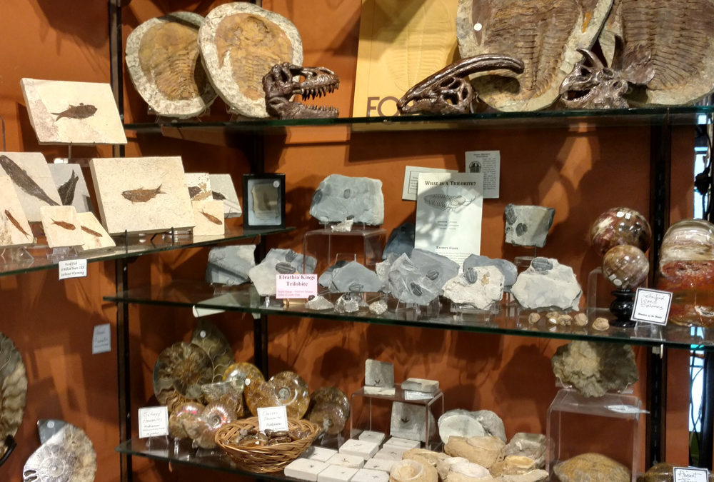 Fossils of many kinds and ages