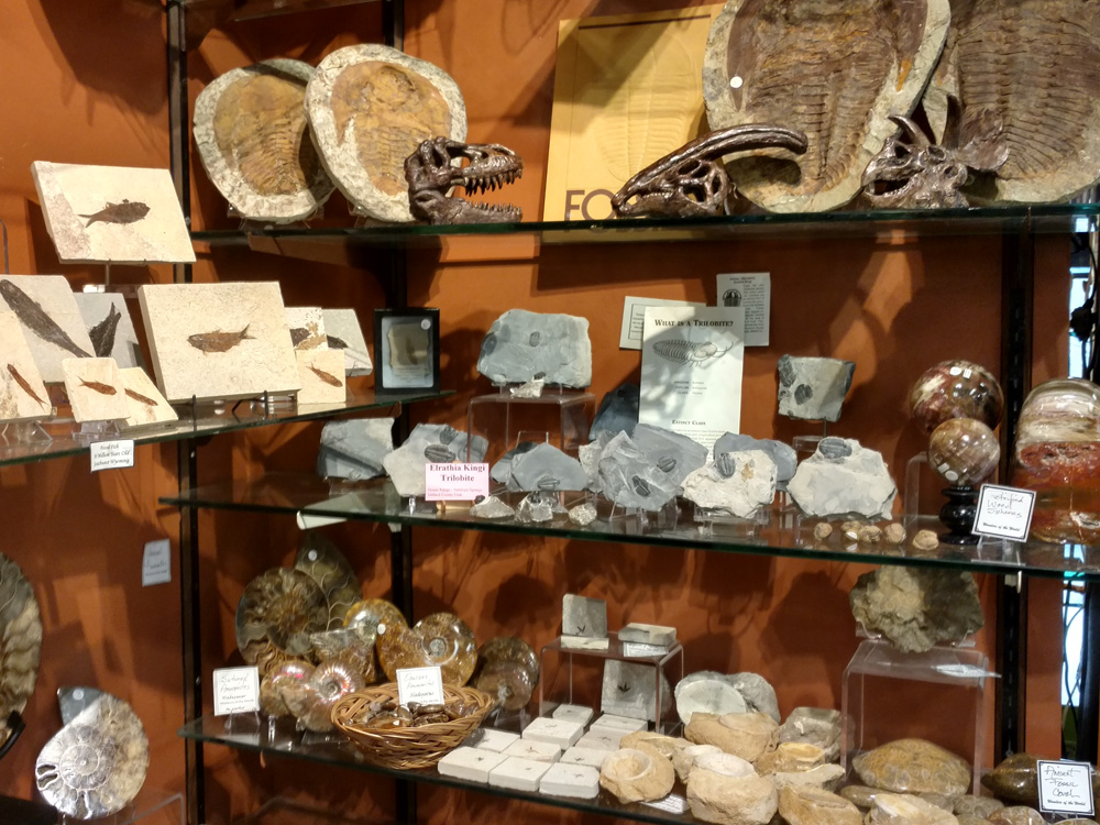 Fossils & Artifacts